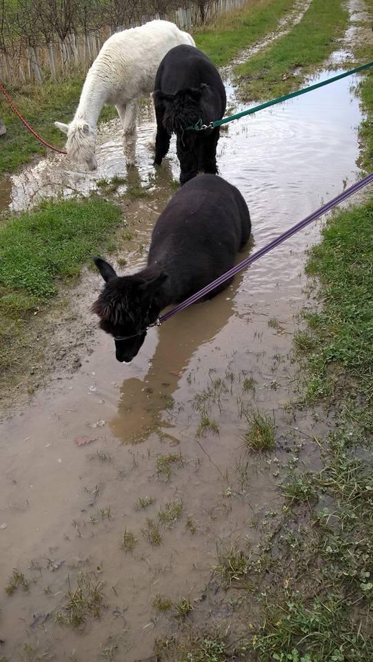Bruno taking a soak
