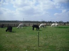 Out for a sunny day in the paddock