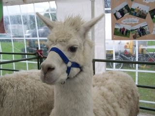 Kimbo at the Great Yorkshire Show.