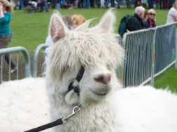 Wellington at the Great Yorkshire Show