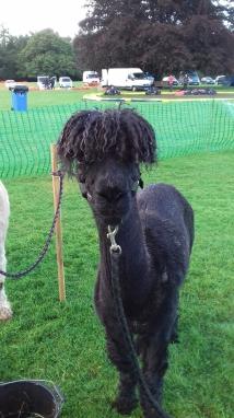 Bruno at a village fete