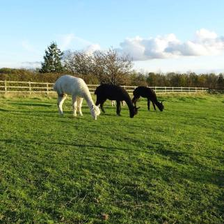 Sunny winters day at the farm