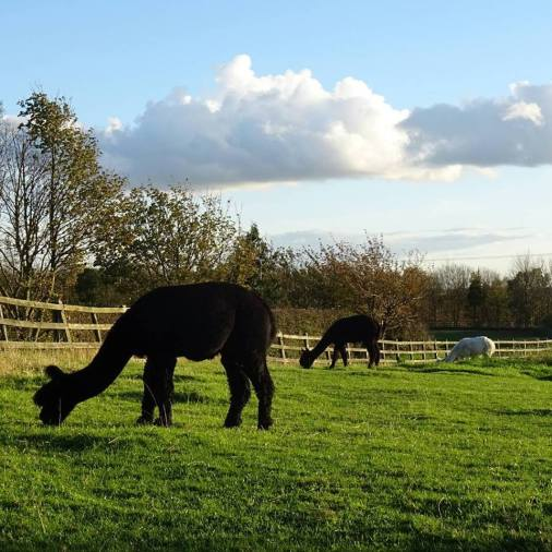 Sunny winters day in the paddock