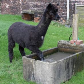 Bailey having a foot soak