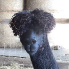 Bomber and his ever growing topknot