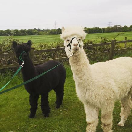 Chester and Bruno area great pair to trek with