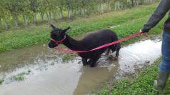 Bruno taking another soak