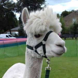 Chester at a local fair