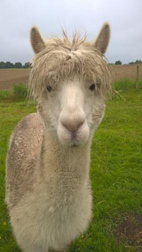 Chester caught in the rain